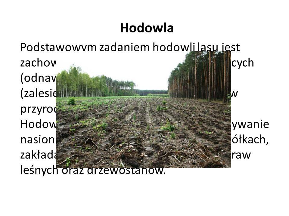 Hodowla Podstawowym zadaniem hodowli lasu jest zachowanie i wzbogacenie lasów istniejących (odnawianie) oraz tworzenie nowych (zalesienie), z respekto