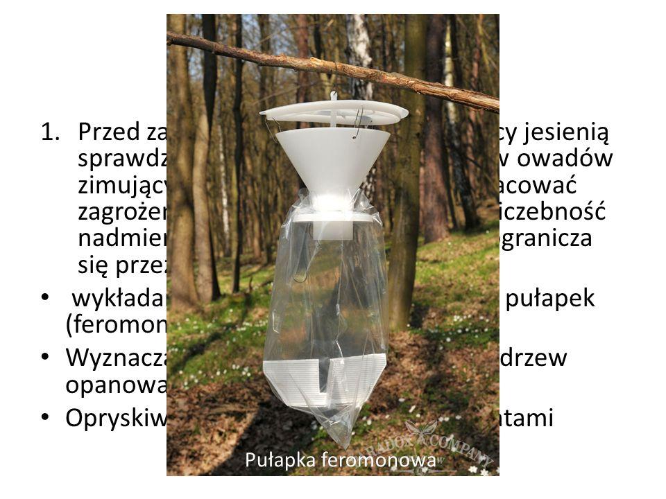 Ochrona lasu 1.Przed zagrożeniami biotycznymi leśnicy jesienią sprawdzają liczebność pędraków i larw owadów zimujących w ściółce i glebie, aby oszacować zagrożenie dla lasu na rok następny.