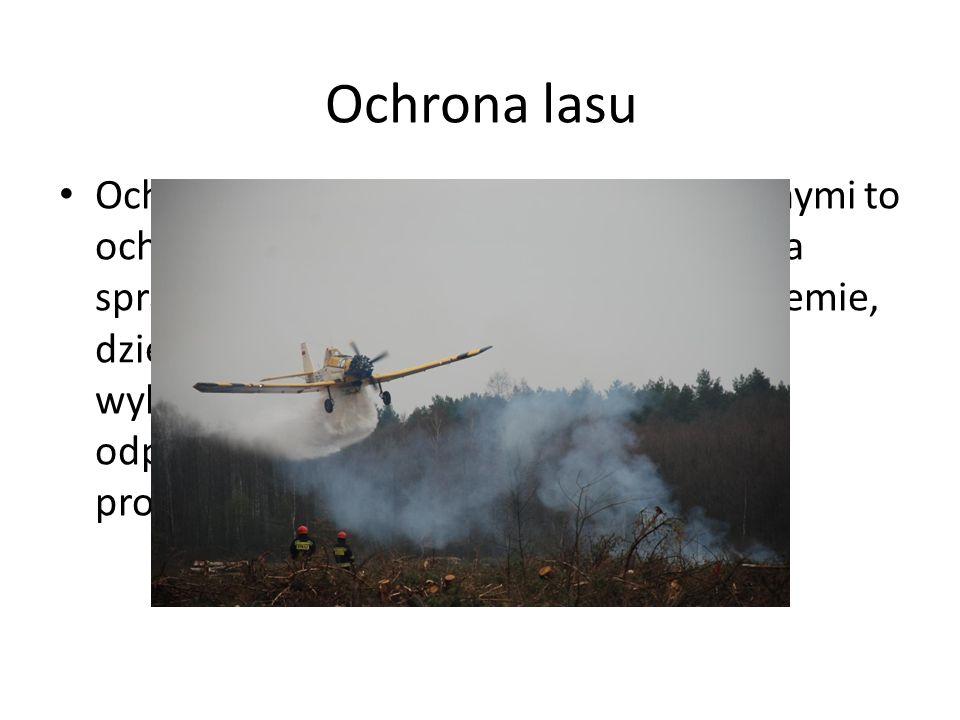 Ochrona przed zagrożeniami apogenicznymi to ochrona przeciwpożarowa lasu oparta na sprawnymi i skutecznie działającym systemie, dzięki któremu możliwe