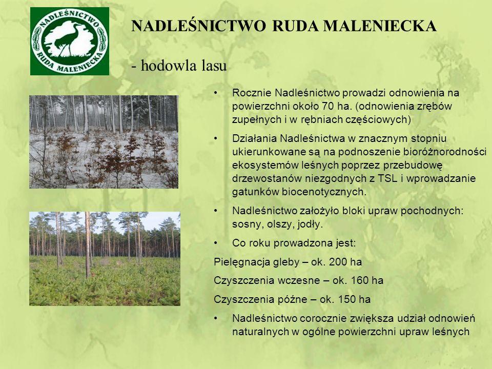 Rocznie Nadleśnictwo prowadzi odnowienia na powierzchni około 70 ha.