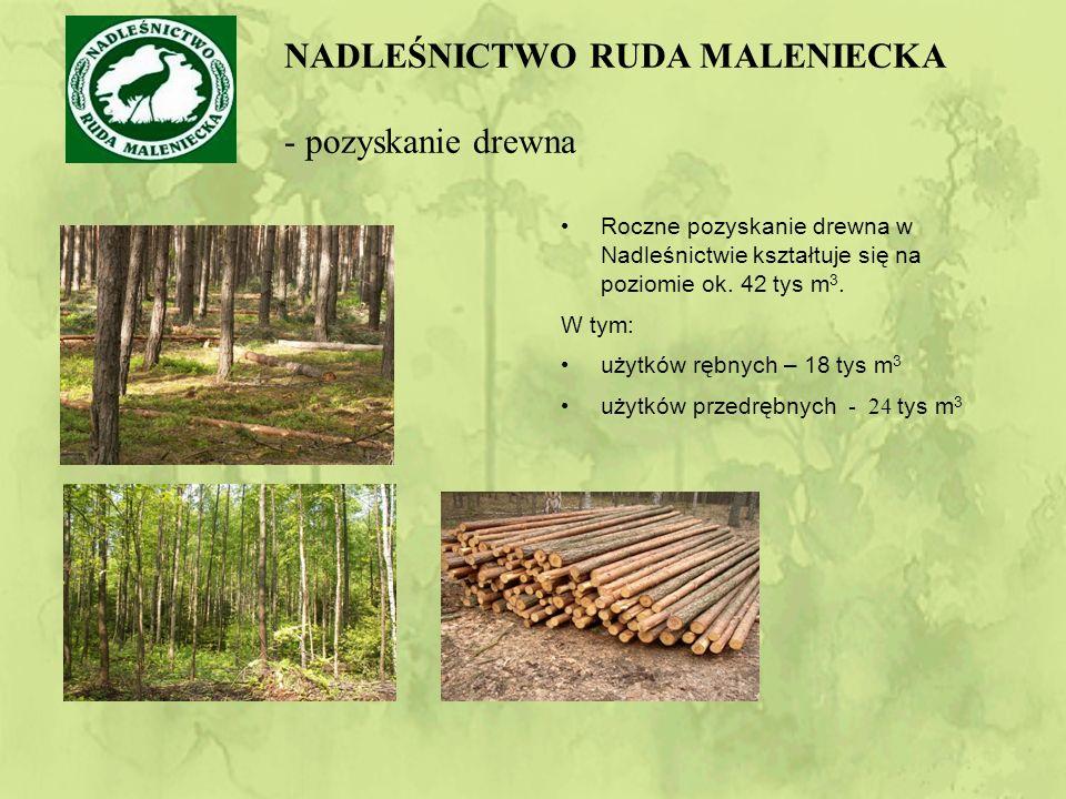 Roczne pozyskanie drewna w Nadleśnictwie kształtuje się na poziomie ok.