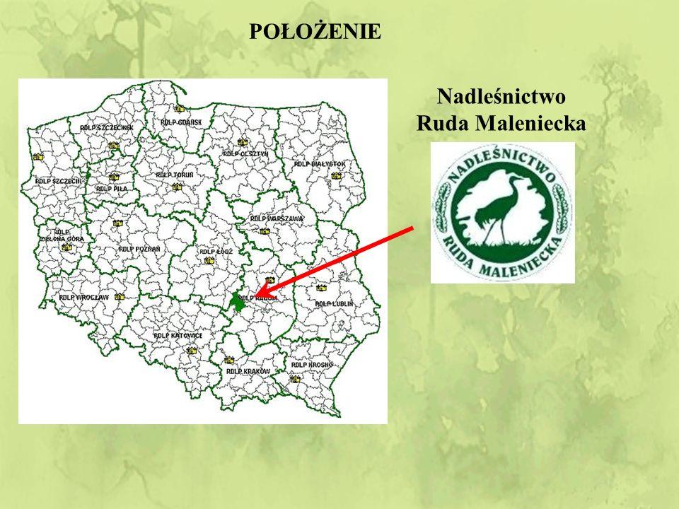 """Na terenie Nadleśnictwa znajduje się: 1 rezerwat przyrody (""""Piekiełko Szkuckie ) 9 pomników przyrody ożywionej Strefy ochronne zwierząt chronionych (bociana czarnego, cietrzewia) Pd - zach część Nadleśnictwa należy do Przedborskiego Parku Krajobrazowego NADLEŚNICTWO RUDA MALENIECKA - ochrona przyrody"""