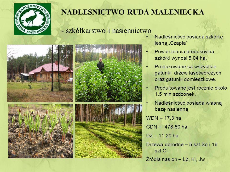 """Nadleśnictwo posiada szkółkę leśną """"Czapla Powierzchnia produkcyjna szkółki wynosi 5,04 ha."""