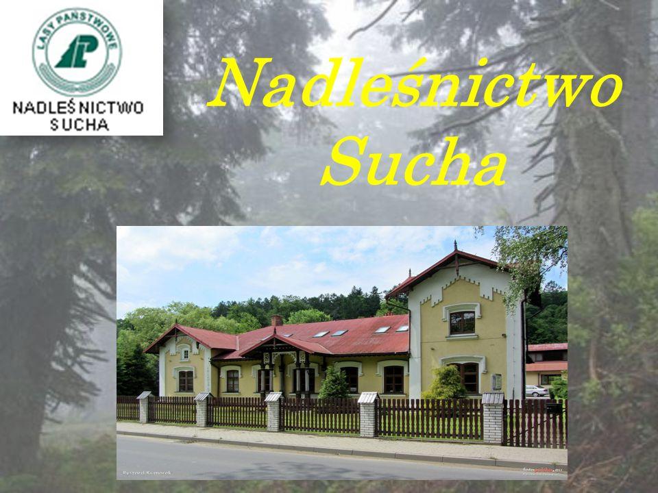 Nadleśnictwo Sucha obejmuje tereny położone w centrum polskich Karpat.