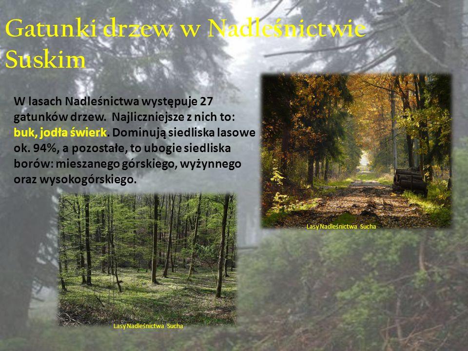 Gatunki drzew w Nadle ś nictwie Suskim W lasach Nadleśnictwa występuje 27 gatunków drzew.