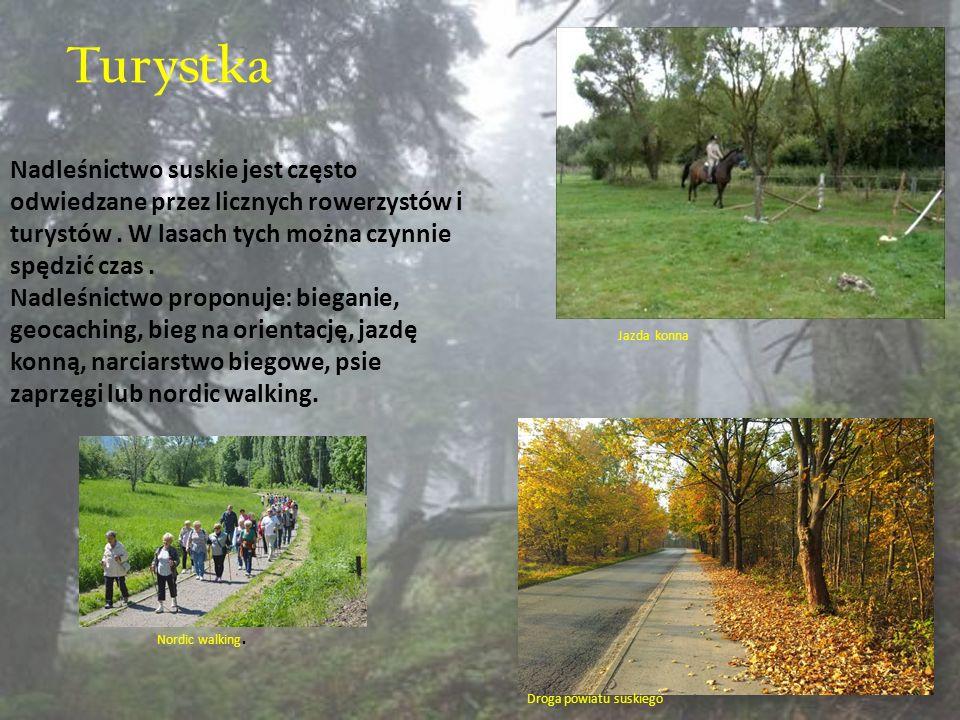 Turystka Nadleśnictwo suskie jest często odwiedzane przez licznych rowerzystów i turystów. W lasach tych można czynnie spędzić czas. Nadleśnictwo prop
