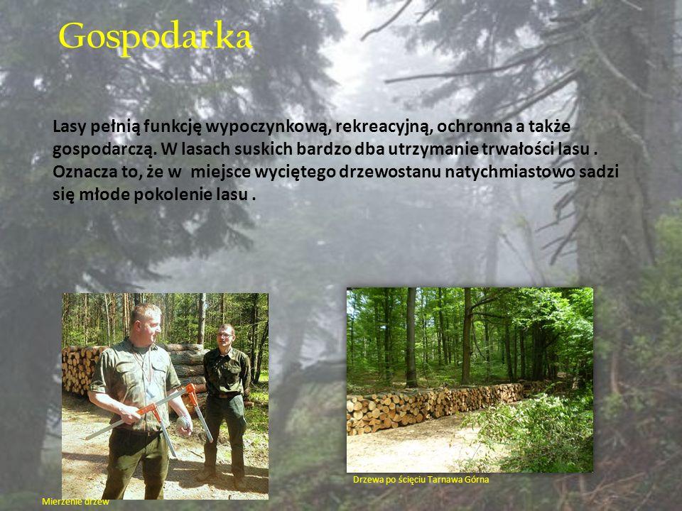 Gospodarka Lasy pełnią funkcję wypoczynkową, rekreacyjną, ochronna a także gospodarczą. W lasach suskich bardzo dba utrzymanie trwałości lasu. Oznacza