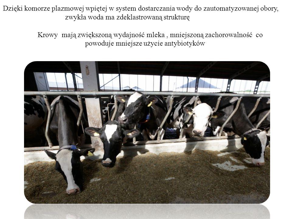Dzięki komorze plazmowej wpiętej w system dostarczania wody do zautomatyzowanej obory, zwykła woda ma zdeklastrowaną strukturę Krowy mają zwiększoną w