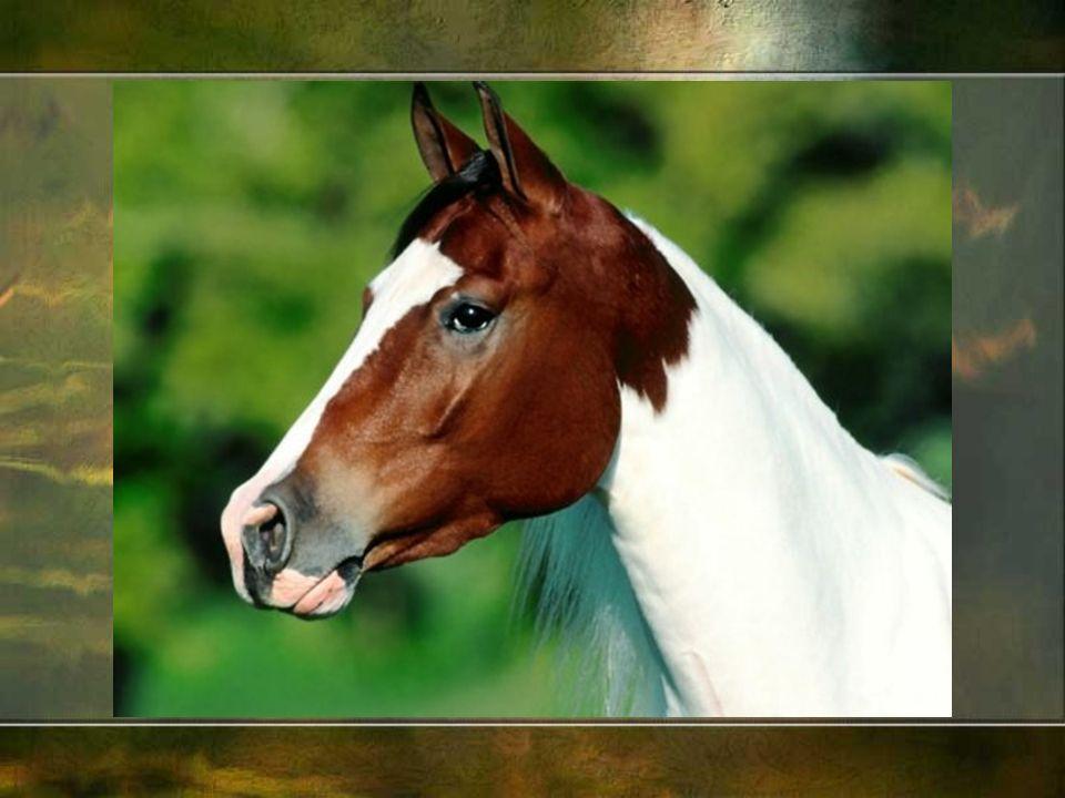To wszak łeb konia był godłem fascynującej Kartaginy, dzięki której w podręcznikach historii mamy wojny punickie i Hannibala.