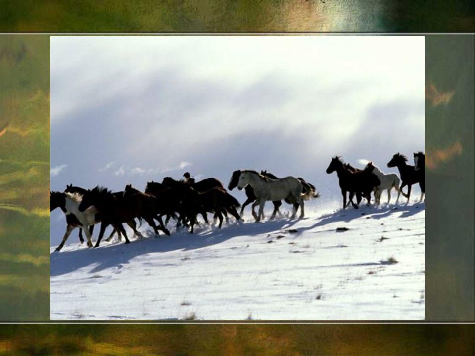 W Polsce konie hodowali chłopi, szlachta i magnaci.