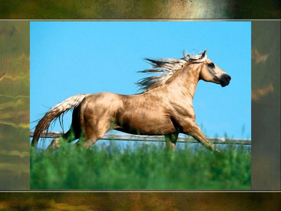 W Polsce hodujemy następujące rasy koni: