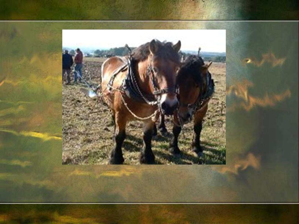 Z czasem konie stały się dla chłop ó w symbolem bogactwa, wygody, prestiżu, pozycji w środowisku.