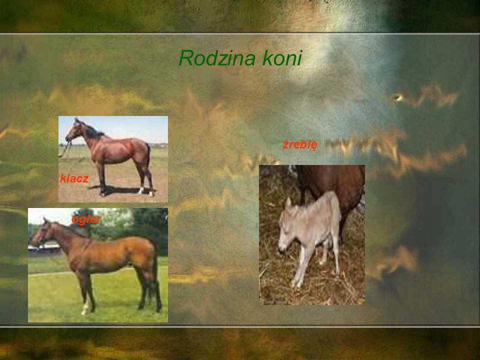 Skoro my wszyscy należymy do rodziny, to też koń ma swoją rodzinę.