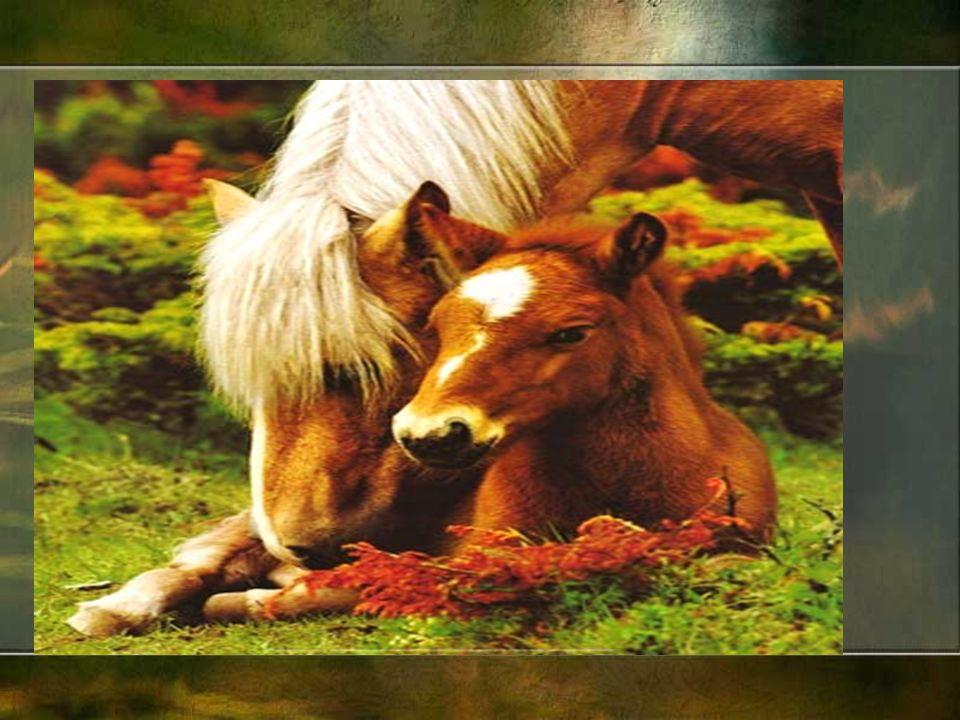Rodzina koni klacz ogier źrebię