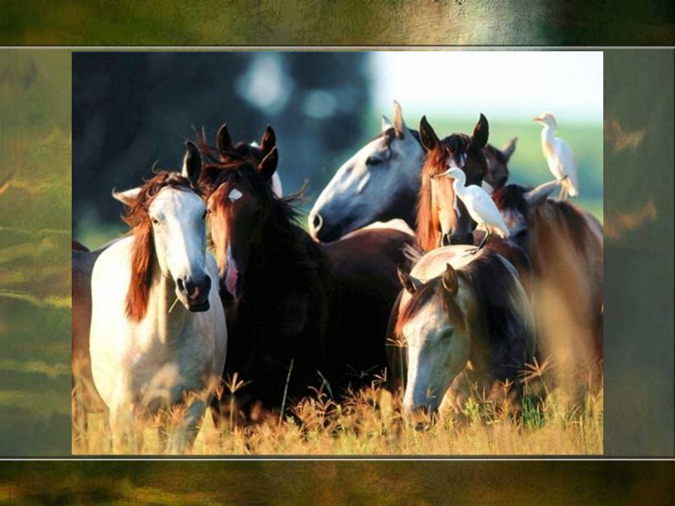 Kuce i małe konie (karłowate) – to wszystkie konie o wysokości w kłębie nieprzekraczającej 152 cm.