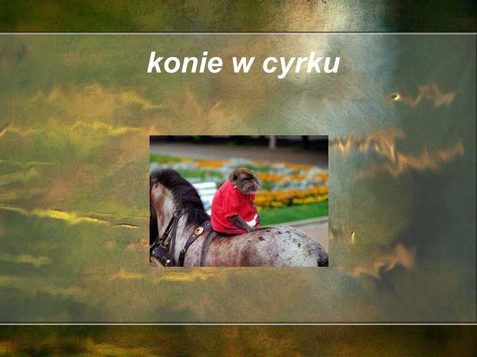 konie królewskie