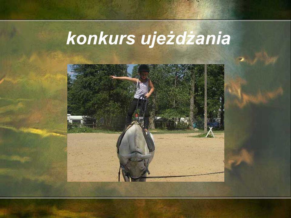konie w cyrku