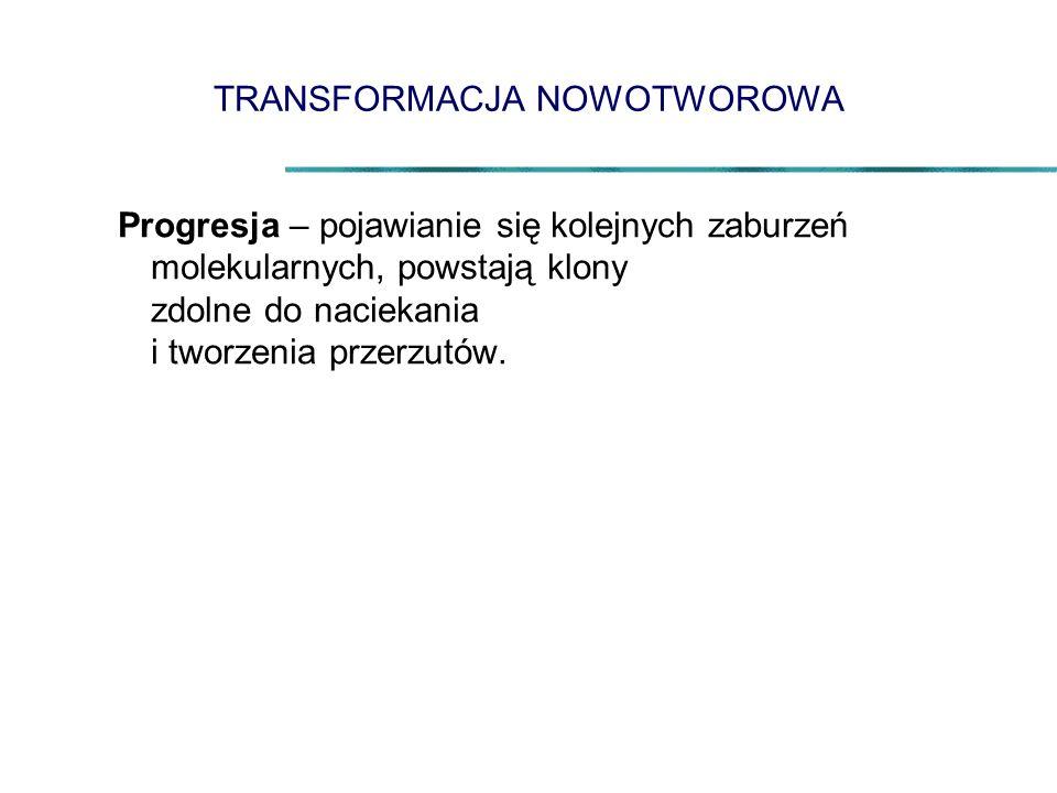 TRANSFORMACJA NOWOTWOROWA Progresja – pojawianie się kolejnych zaburzeń molekularnych, powstają klony zdolne do naciekania i tworzenia przerzutów.