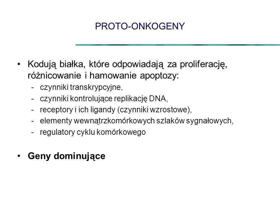 PROTO-ONKOGENY Kodują białka, które odpowiadają za proliferację, różnicowanie i hamowanie apoptozy: -czynniki transkrypcyjne, -czynniki kontrolujące replikację DNA, -receptory i ich ligandy (czynniki wzrostowe), -elementy wewnątrzkomórkowych szlaków sygnałowych, -regulatory cyklu komórkowego Geny dominujące