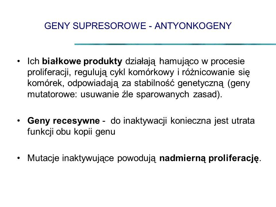 GENY SUPRESOROWE - ANTYONKOGENY Ich białkowe produkty działają hamująco w procesie proliferacji, regulują cykl komórkowy i różnicowanie się komórek, odpowiadają za stabilność genetyczną (geny mutatorowe: usuwanie źle sparowanych zasad).