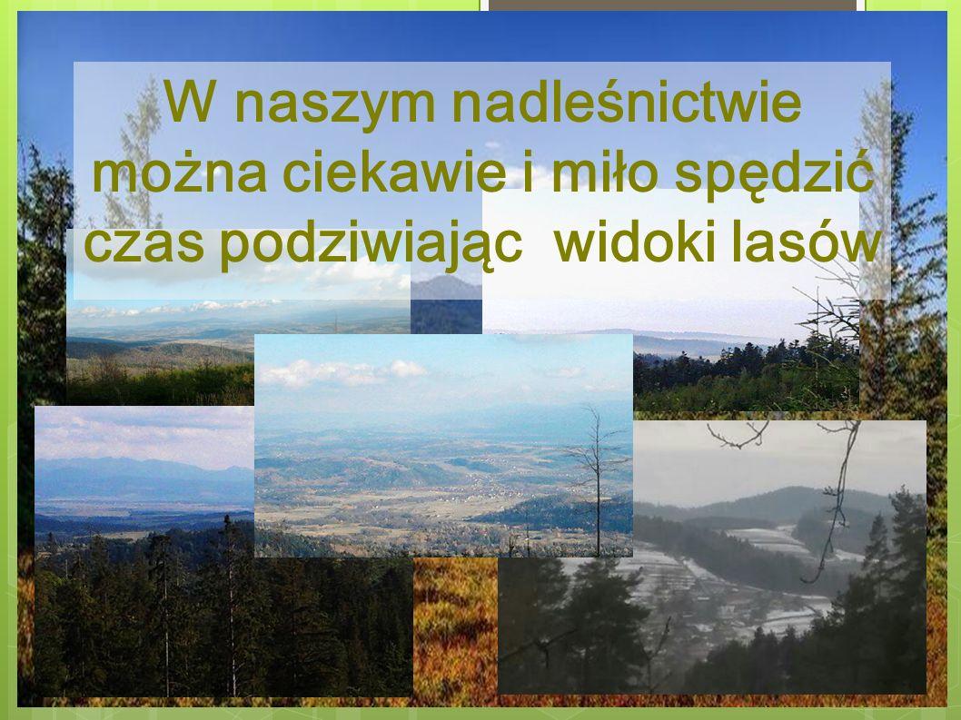 Jasień Czarna hala Babia Góra Polica Leskowiec Gdzie leżą zaprezentowane miejsca ?