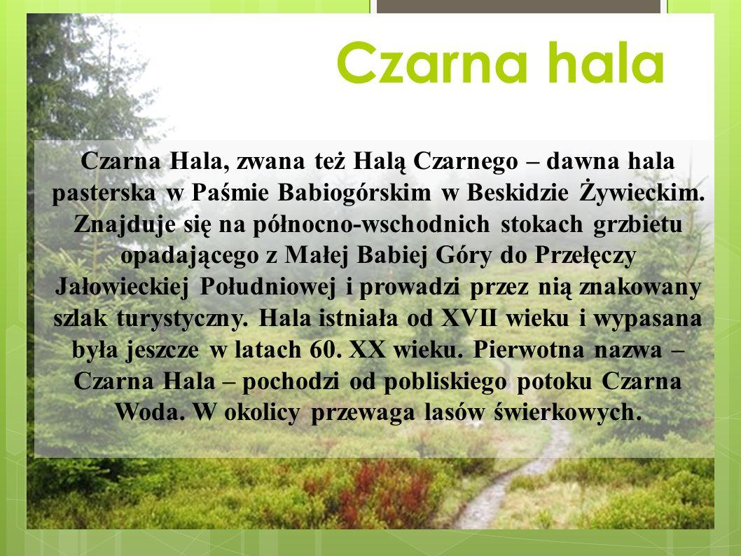 Czarna hala Czarna Hala, zwana też Halą Czarnego – dawna hala pasterska w Paśmie Babiogórskim w Beskidzie Żywieckim.