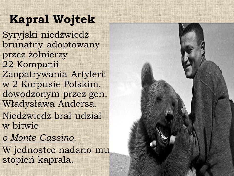 Kapral Wojtek Syryjski niedźwiedź brunatny adoptowany przez żołnierzy 22 Kompanii Zaopatrywania Artylerii w 2 Korpusie Polskim, dowodzonym przez gen.