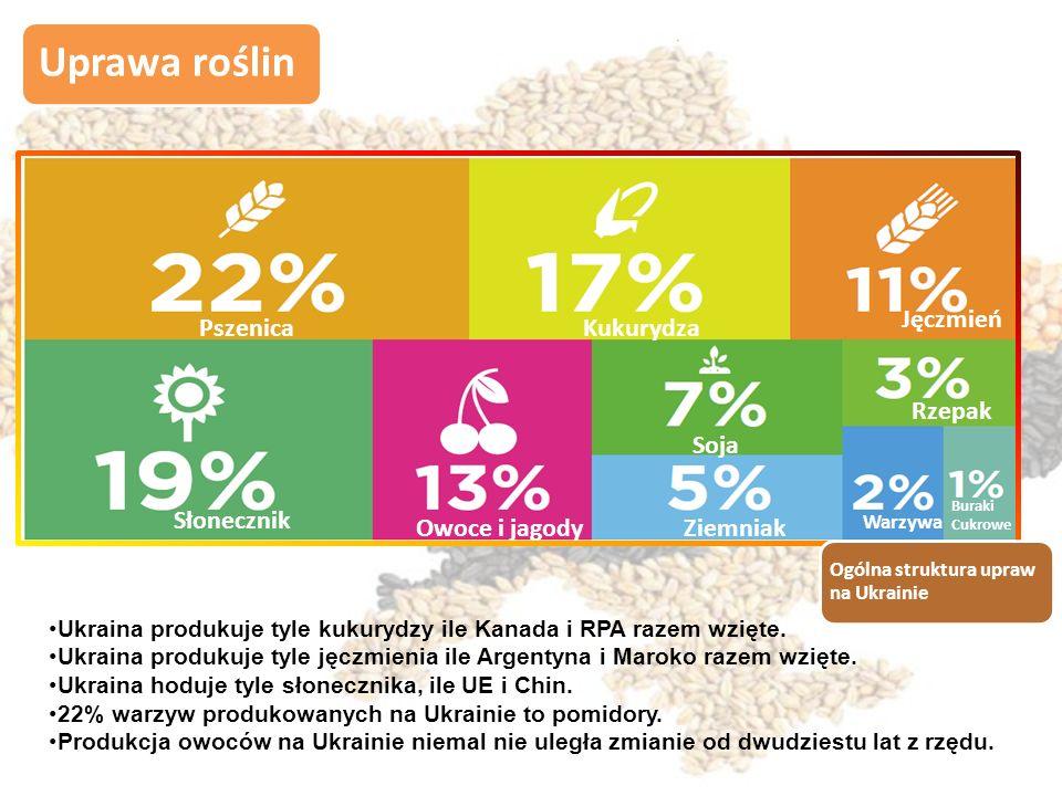 Uprawa roślin Ogólna struktura upraw na Ukrainie PszenicaKukurydza Jęczmień Słonecznik Owoce i jagody Soja Ziemniak Rzepak Warzywa Buraki Cukrowe Ukraina produkuje tyle kukurydzy ile Kanada i RPA razem wzięte.