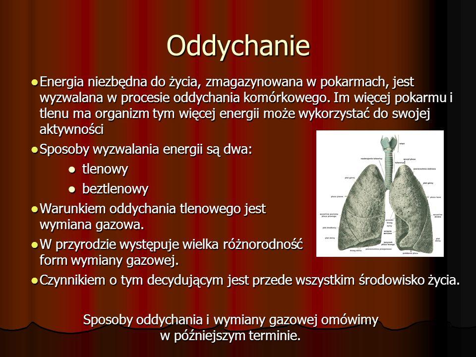 Oddychanie Energia niezbędna do życia, zmagazynowana w pokarmach, jest wyzwalana w procesie oddychania komórkowego.