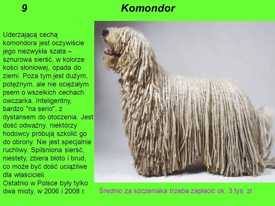 To potomek wiejskich psów, które były wykorzystywane także przez handlarzy do ciągnięcia wózków, a w czasie II wojny światowej przenosiły meldunki i s