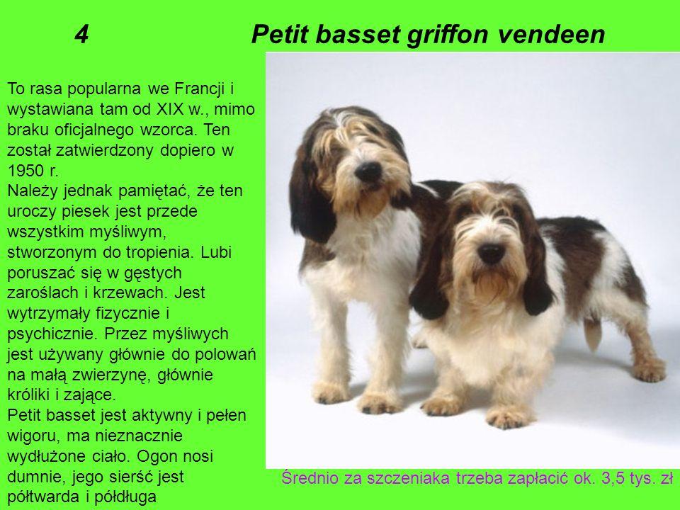 To rasa popularna we Francji i wystawiana tam od XIX w., mimo braku oficjalnego wzorca.