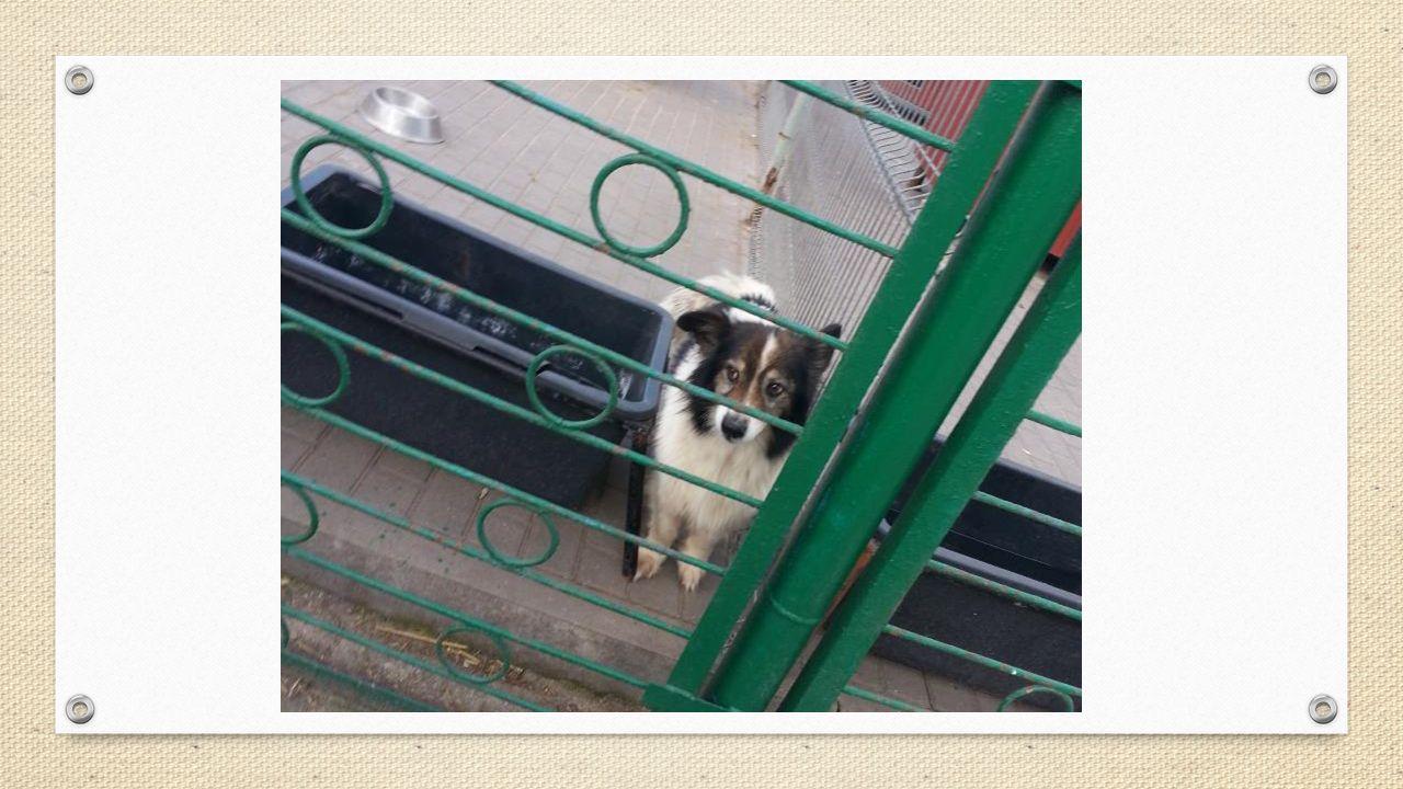 """""""Pies ma tylko jeden cel w życiu. Obdarować kogoś swoim sercem . J. R. Ackerley"""