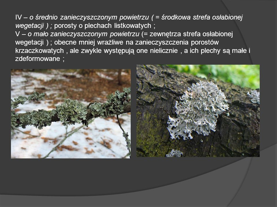 IV – o średnio zanieczyszczonym powietrzu ( = środkowa strefa osłabionej wegetacji ) ; porosty o plechach listkowatych ; V – o mało zanieczyszczonym powietrzu (= zewnętrza strefa osłabionej wegetacji ) ; obecne mniej wrażliwe na zanieczyszczenia porostów krzaczkowatych, ale zwykle występują one nielicznie, a ich plechy są małe i zdeformowane ;