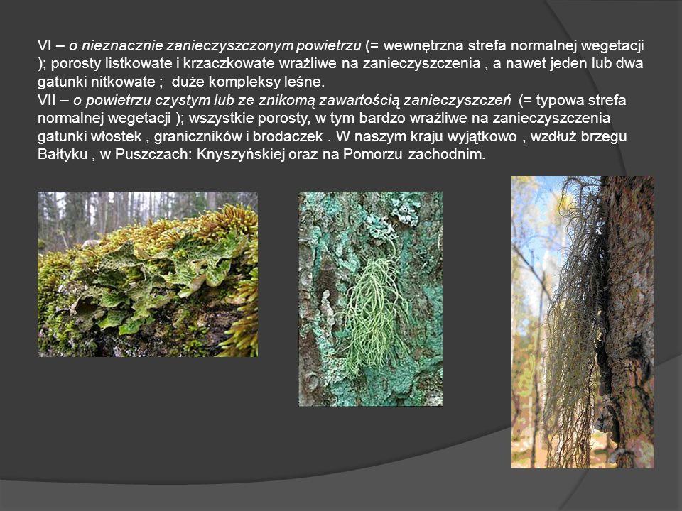 VI – o nieznacznie zanieczyszczonym powietrzu (= wewnętrzna strefa normalnej wegetacji ); porosty listkowate i krzaczkowate wrażliwe na zanieczyszczenia, a nawet jeden lub dwa gatunki nitkowate ; duże kompleksy leśne.