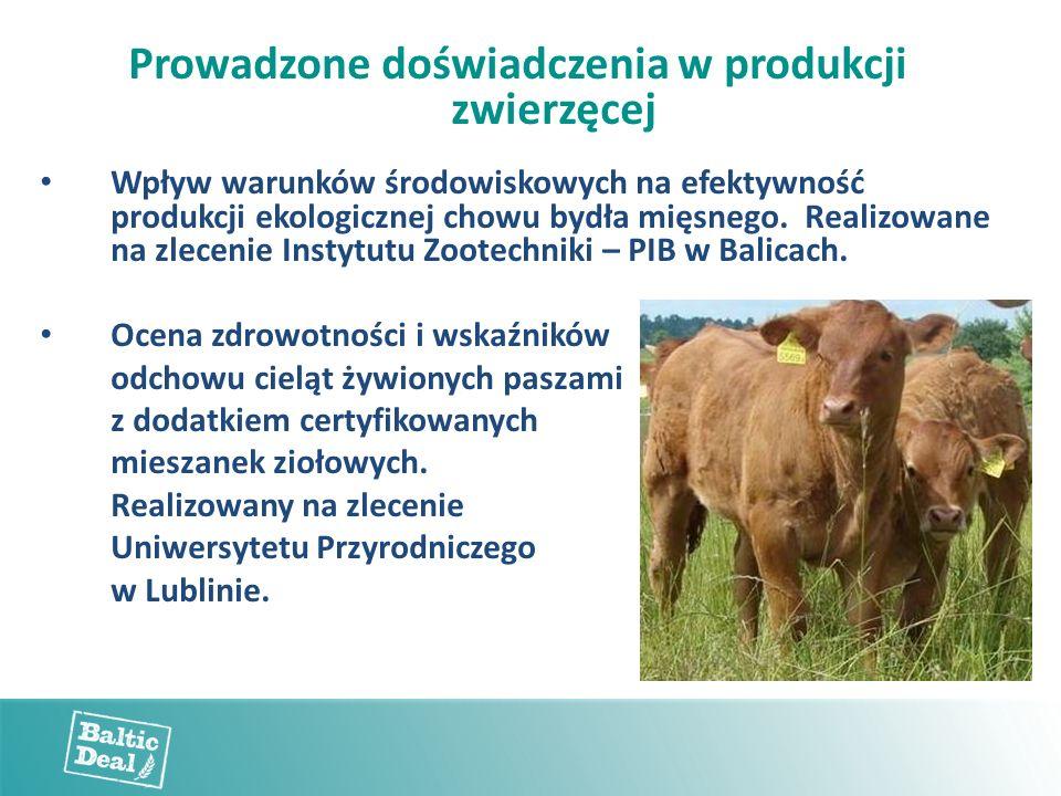 Prowadzone doświadczenia w produkcji zwierzęcej Wpływ warunków środowiskowych na efektywność produkcji ekologicznej chowu bydła mięsnego.