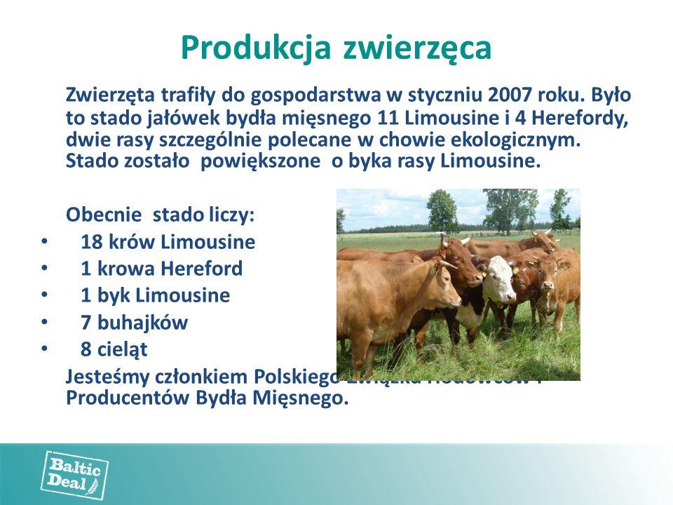 Produkcja zwierzęca Zwierzęta trafiły do gospodarstwa w styczniu 2007 roku. Było to stado jałówek bydła mięsnego 11 Limousine i 4 Herefordy, dwie rasy