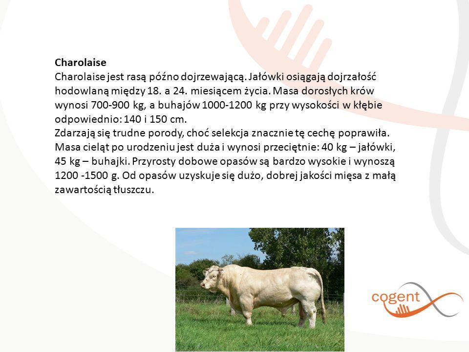 Charolaise Charolaise jest rasą późno dojrzewającą. Jałówki osiągają dojrzałość hodowlaną między 18. a 24. miesiącem życia. Masa dorosłych krów wynosi