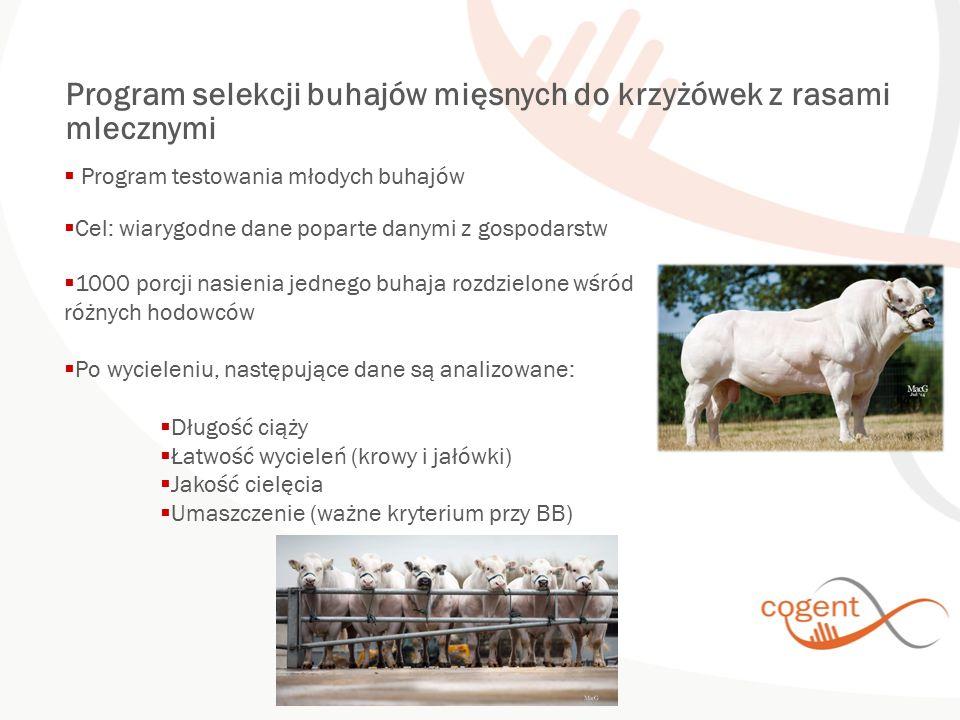 Program selekcji buhajów mięsnych do krzyżówek z rasami mlecznymi  Program testowania młodych buhajów  Cel: wiarygodne dane poparte danymi z gospoda