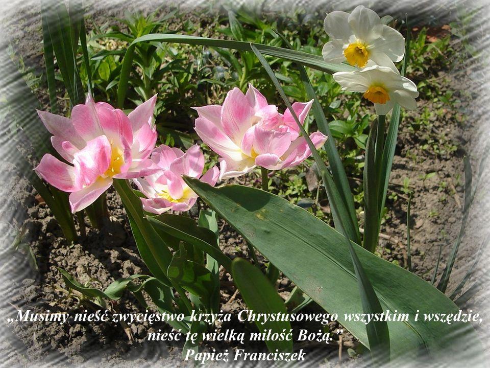 """""""Musimy nieść zwycięstwo krzyża Chrystusowego wszystkim i wszędzie, nieść tę wielką miłość Bożą."""" Papież Franciszek"""