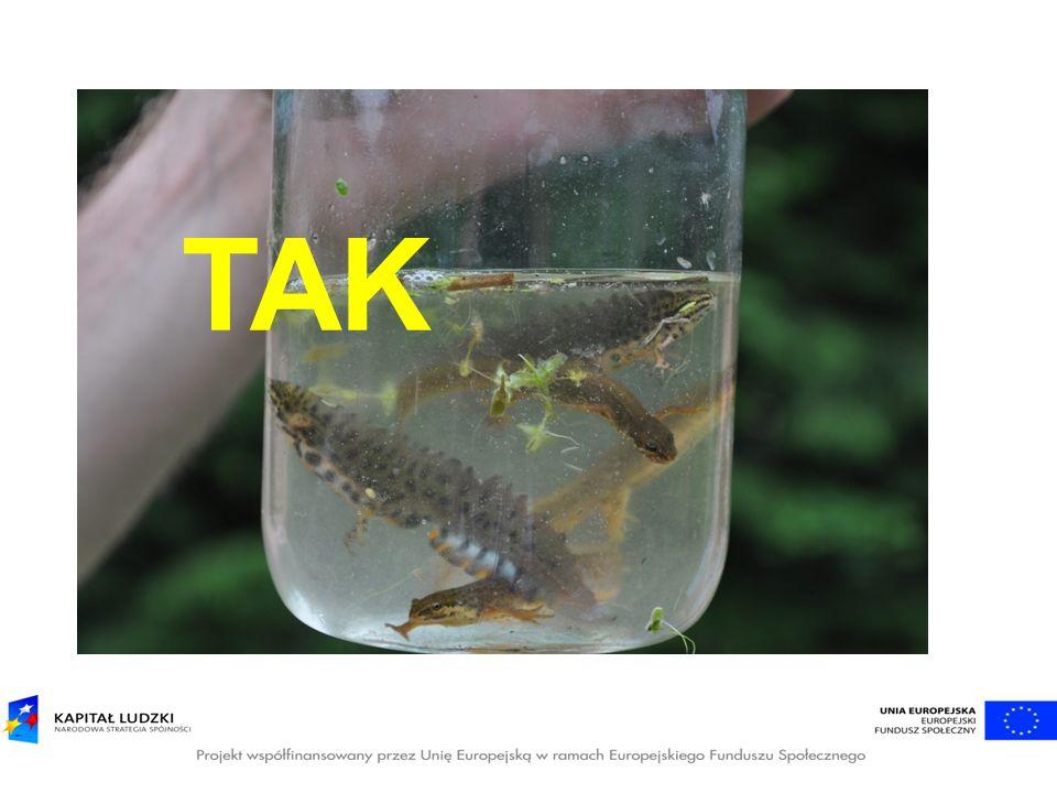 Jeśli chcemy mieć tekst na zdjęciu, to warto zastosować efekt znaku wodnego lub przyciemniania.