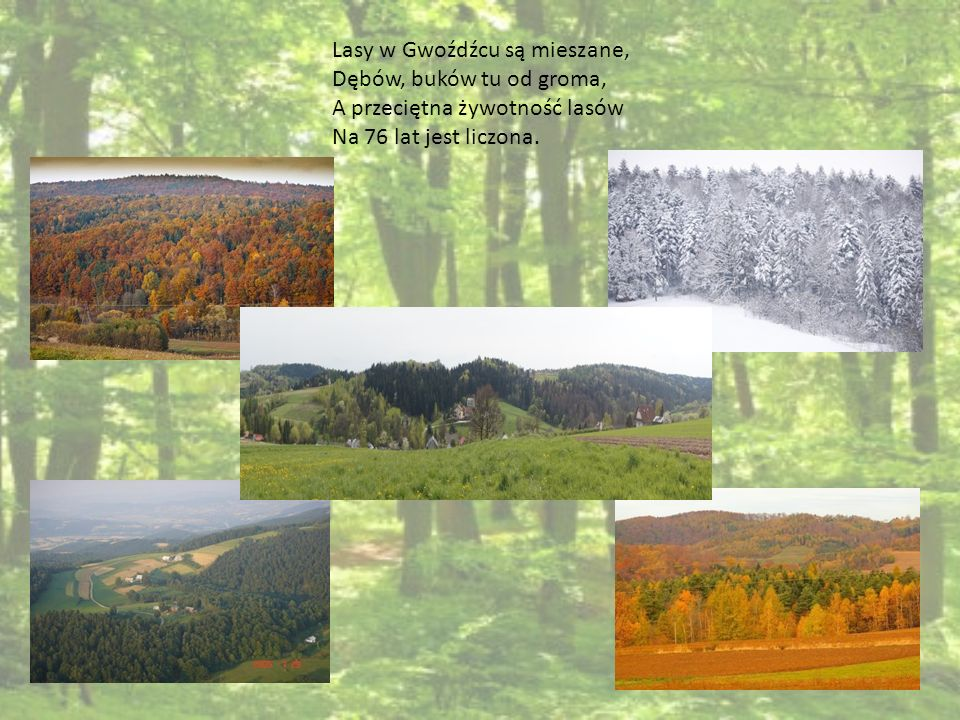 NADLEŚNICTWO BRZESKO Nasze Nadleśnictwo Brzesko W Bochni swą siedzibę ma, Dzieli się na siedem leśnictw, Gdzie leśniczy swój fach zna.