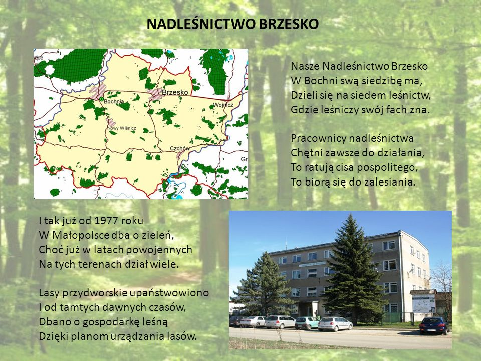 NADLEŚNICTWO BRZESKO Nasze Nadleśnictwo Brzesko W Bochni swą siedzibę ma, Dzieli się na siedem leśnictw, Gdzie leśniczy swój fach zna. Pracownicy nadl