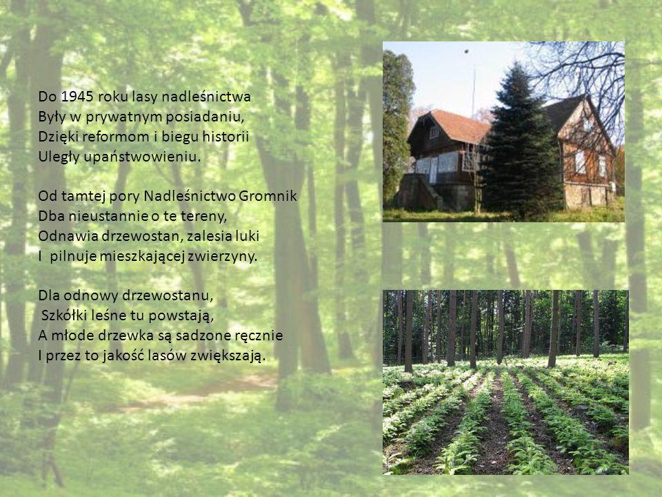 Do 1945 roku lasy nadleśnictwa Były w prywatnym posiadaniu, Dzięki reformom i biegu historii Uległy upaństwowieniu. Od tamtej pory Nadleśnictwo Gromni