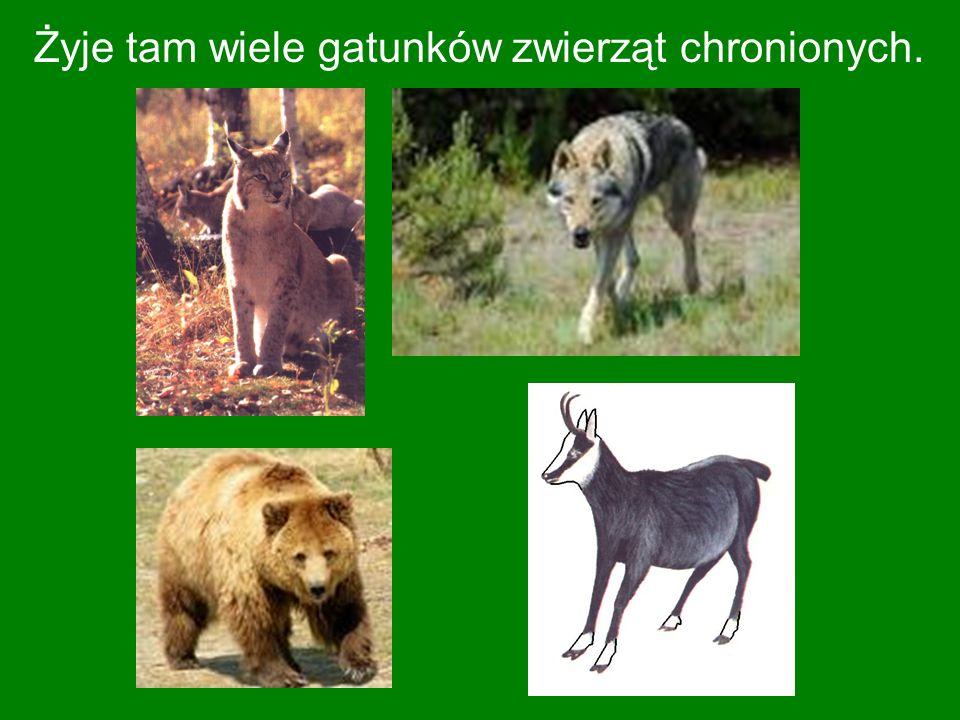 Żyje tam wiele gatunków zwierząt chronionych.