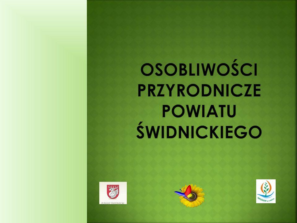 W rzekach naszego powiatu występują gatunki ryb charakterystyczne dla polskich wód nizinnych, m.in.: szczupak, okoń i płoć.