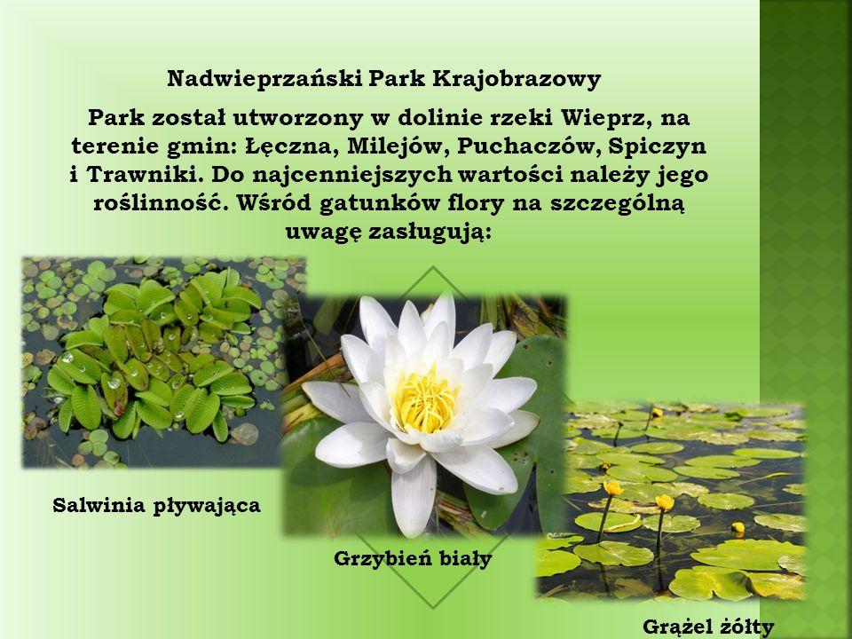 Nadwieprzański Park Krajobrazowy Park został utworzony w dolinie rzeki Wieprz, na terenie gmin: Łęczna, Milejów, Puchaczów, Spiczyn i Trawniki.