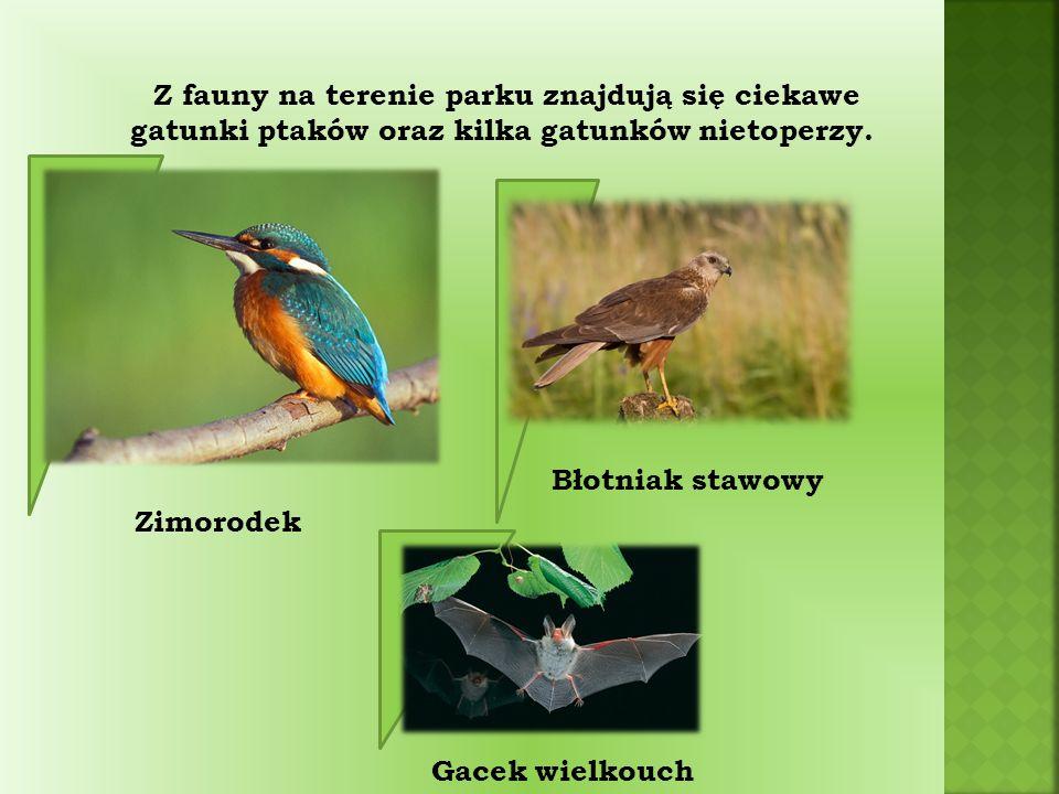 Z fauny na terenie parku znajdują się ciekawe gatunki ptaków oraz kilka gatunków nietoperzy.