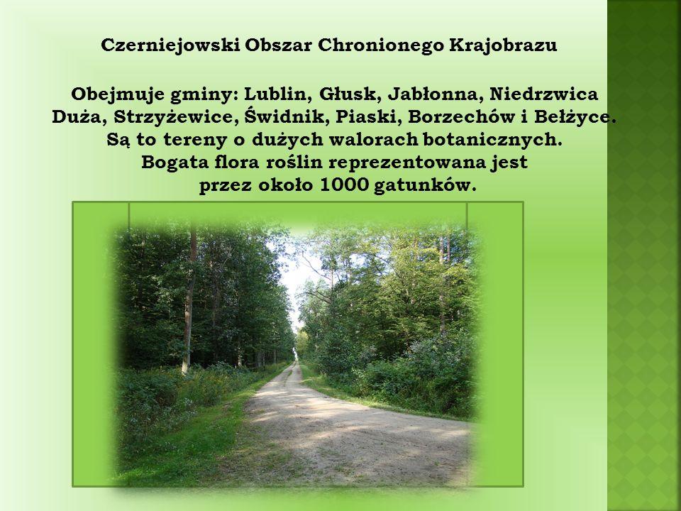 Czerniejowski Obszar Chronionego Krajobrazu Obejmuje gminy: Lublin, Głusk, Jabłonna, Niedrzwica Duża, Strzyżewice, Świdnik, Piaski, Borzechów i Bełżyce.