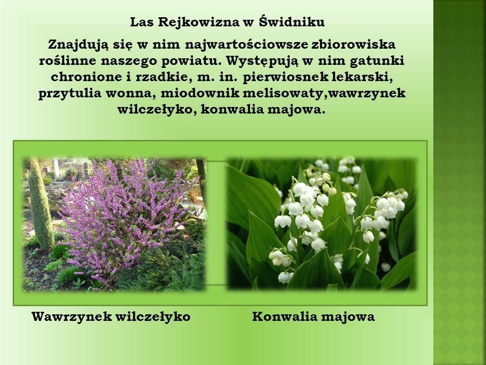 Znajdują się w nim najwartościowsze zbiorowiska roślinne naszego powiatu.