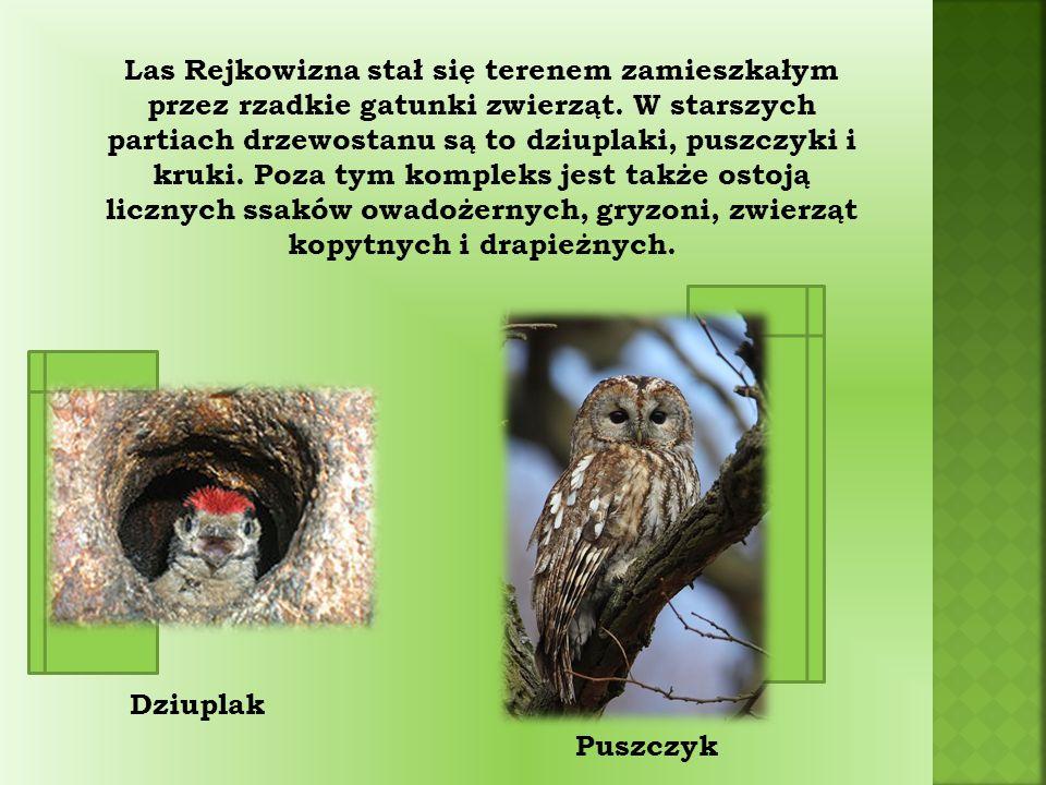 Las Rejkowizna stał się terenem zamieszkałym przez rzadkie gatunki zwierząt.